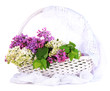 Beautiful lilac flowers in wicker basket, isolated on white