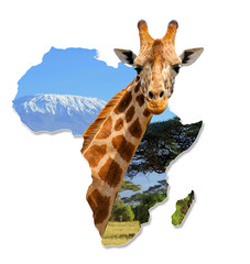 Africa Wildlife Map Design