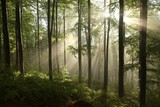 Spring beech forest after a few days of rain in a foggy morning