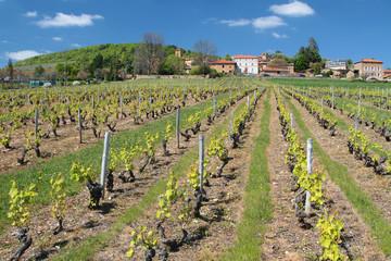Vignoble et village en beaujolais