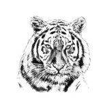 tiger art illustration color - 64550062