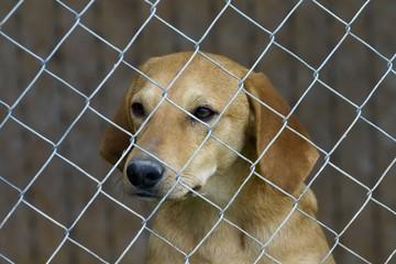 cane triste in gabbia, canile