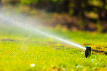Gardening. Lawn sprinkler spraying water over grass.