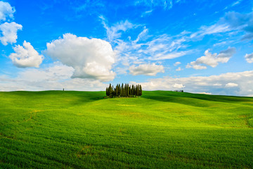 Cypress group and field rural landscape in Orcia, San Quirico, T