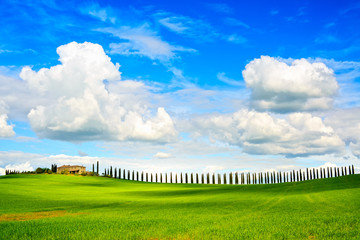 Tuscany, farmland, cypress trees row and field. Siena, Val d Orc