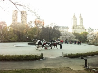 Horse carriage, Central Park