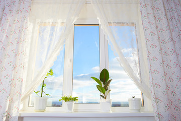 Window with plants. Schefflera , ficus , violet.