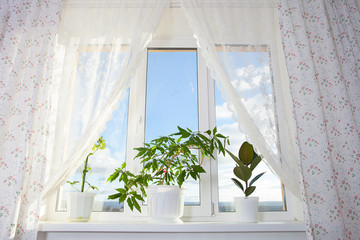 Image of window and curtain in the room