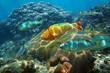 Underwater scenery in the Caribbean sea