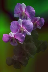 orchid and reflection