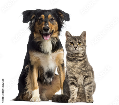 Foto op Plexiglas Kat Cat and dog sitting together