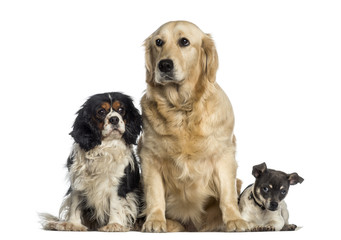 group of dogs sitting together