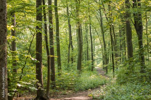 Leinwanddruck Bild Wald weg