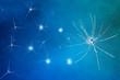 Neuroni sinapsi funzioni cervello