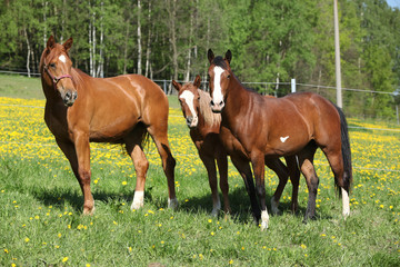 Batch of western horses on pasturage