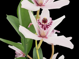 Close-up of an orchid plant