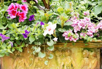 Balkonblumen in Terracotta-Kasten