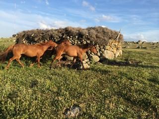 Meradaki Atlar