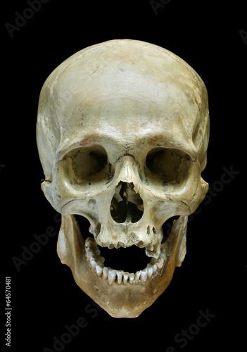 canvas print picture Skull