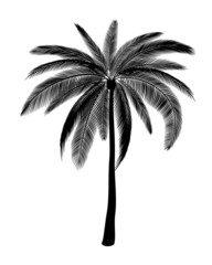Silhouette of palm