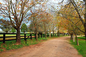 Tree lined dirt road in Autumn