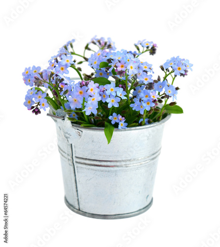 Papiers peints Printemps Forget-me-not isolated