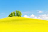 Rapsfeld mit Baum am Bodensee