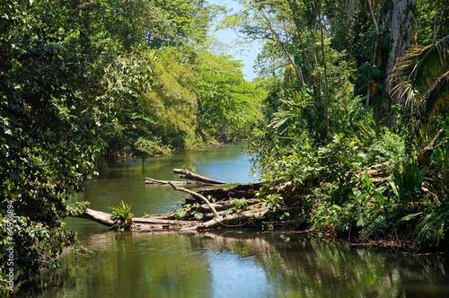 Fototapete tropischer regenwald  400_F_64574894_szh3kyRgkqa2T7skQlVntKK6SfluQef8.jpg