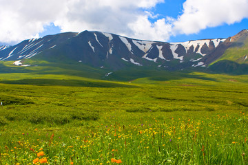 alpine summer meadow