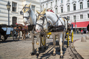 Traditional horse carriage in Vienna, Austria