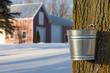 Leinwandbild Motiv Maple Syrup Tapping