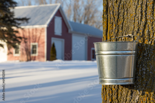 Maple Syrup Tapping - 64582814