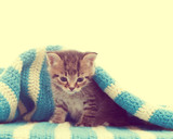 funny cute tabby kitten and a blue blanket - 64583281