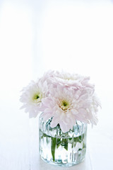 chrysanthemum flowers in a jar