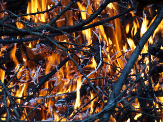 Burning branches