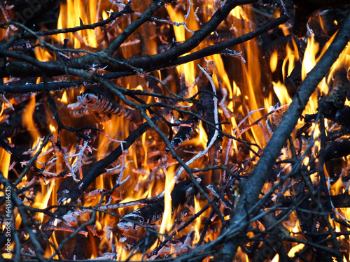 Burning branches - 64584635