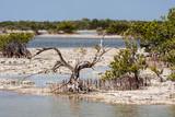 Zapata National Park Cuba  - swamp mangrove