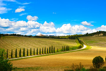 Tuscany, vineyard, cypress trees and road, rural landscape, Ital