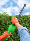 Trimming bushes with an electrical hedge trimmer