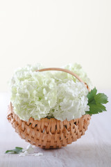 White hydrangea flowers on rustic wooden
