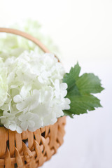 White hydrangea flowers on rustic wooden basket