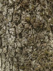 Corteza de árbol.