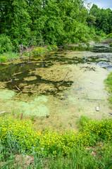 swamp summer