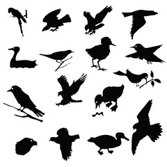 black silhouettes of birds
