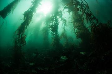 Kelp Forest 3