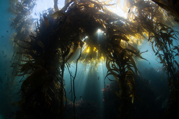 Kelp Forest 2