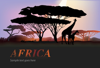 Africa elephants silhouette with tree and orange sun