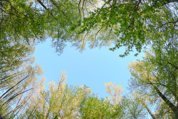 treetops on a background of blue sky nature beautiful landscape