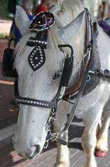 carriage horse