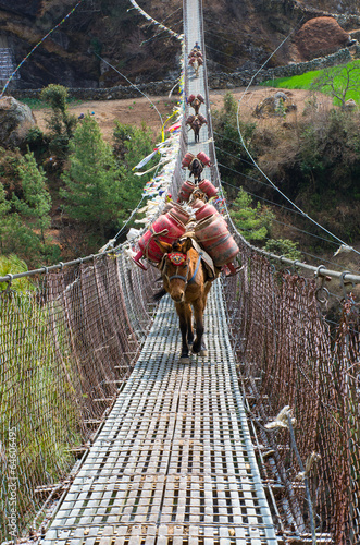 Donkey caravan in mountains on the bridge, Nepal